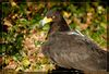 f-zoo-madrid-aves-img_1989-c01-dm.jpg
