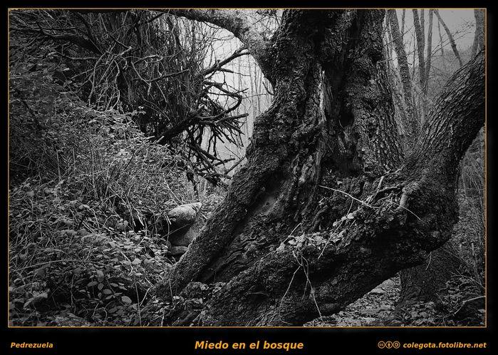 Miedo en el bosque