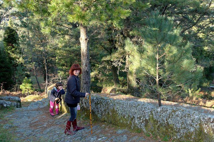 Monte Aloia Nature Park Wallpaper Amcordesignus